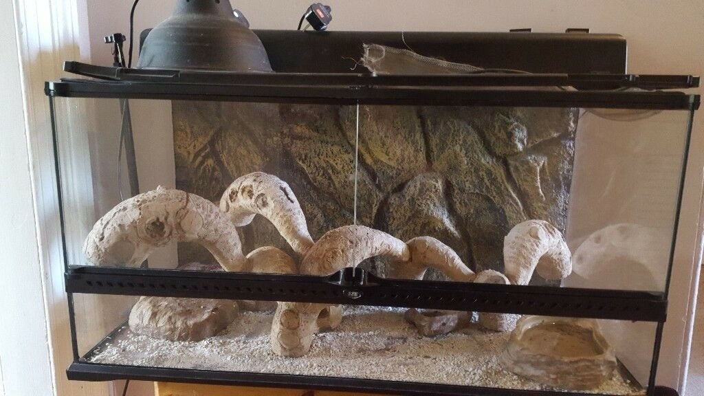 Exo Terra Natural Vivarium Large Wide In Dunblane Stirling Gumtree