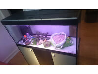 4ft FLUVAL FISH TANK STAND FOR SALE,,FULL SET UP