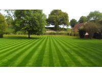 Lawn grass cutting
