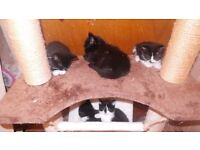 6 lovely fluffy kittens l@@k.......
