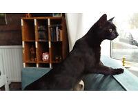 Found: Black Kitten in Barton Hill
