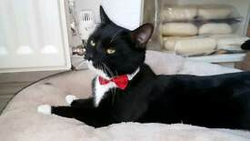 Male cat WITH ALL HIS THINGS URGENT