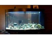 Large curved aquarium