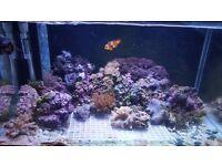 Full marine fish tank setup
