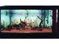 Complete Aquarium Setup - Fluval Roma 200L + Cabinet