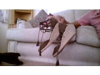 Boots and Shoes Size 7 never worn