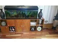 Fish tank 4ft×12in×17in. Hight