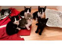 Friendly kittens