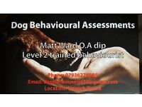 Dog Behavioural Assessments (Behavioural & Obedience training)