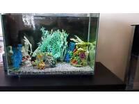 Fish tank/Fish
