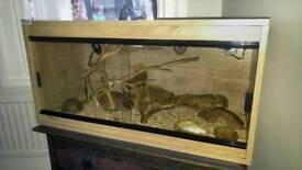 4ft vivarium complete with young leopard gecko