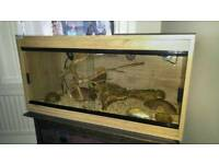 4ft vivarium complete with young gecko