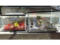 Fish tanks, filter, toys etc