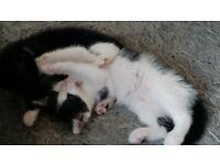 Kittens for sale!!!!