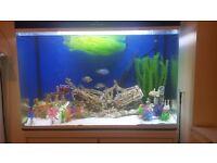 3ft cleair aquarium
