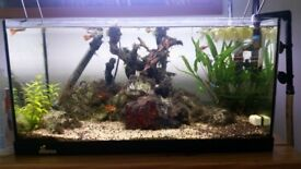Tank for sale fish for free