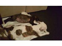 12 week old puppy
