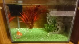 21L fish tank for sale
