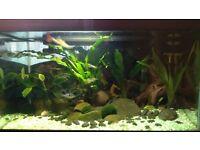 54l Fish tank - full equipment