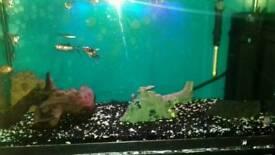 Fish tank and fish full tropical set up
