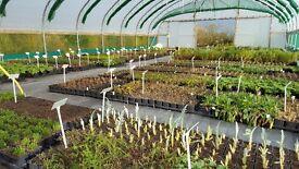 Wholesale plant nursery worker