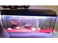 3 and a half foot fish tank for sale need it gone asap