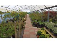 3L plants SUMMER SALE - Birchfield Nursery, Henfield