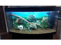 4FT 260 LITER JUWEL VISION BOW FRONTED FISH TANK AND STAND FOR SALE,FULL SET UP