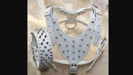 Brand new real leather matching harness dog collar puppy collar postage available