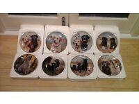 Collectable fine porcelain labrador plates