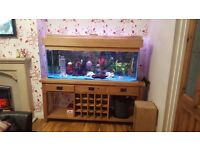 5ft fish tank and natural oak unit fish and accessories included