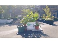 Plants for sale , little garden centre Newport St Vauxhall plants for containers balconies gardens