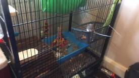 Rat or ferret cage