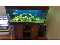 Juwel 180L fish tank