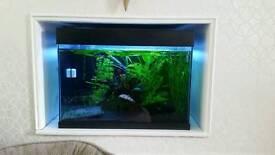 70 litre aquarium