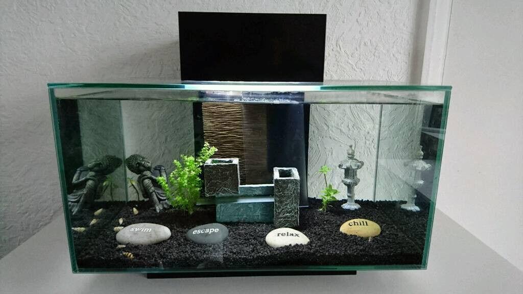 Aquarium fish tank fluval edge 23 litres black mint for Aquarium edge