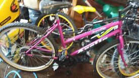 Ladies mountain bike Apollo Agilla