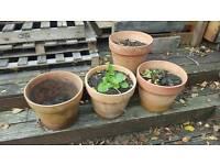 4 large terracotta pots