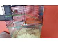 2 male gerbils and cage