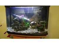 Tropical fish tank including stand, fish, heater, pump, food - Everthing that's needed!
