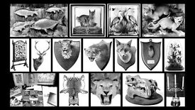 WANTED: ANTIQUE TAXIDERMY birds, mammals, fish, hunting trophies, heads, skins, natural history etc