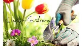 Glasgow Gardening for colour in your garden