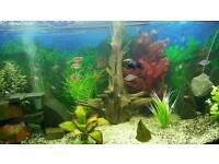 Aquarium - full setup Juwel 260l