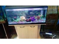 3.3FT LIGHT GLO FISHTANK WITH BEECHWOOD STAND IN GOOD CONDITION