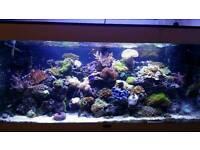 Marine fish tank jewel 240l