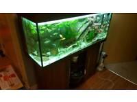 250l aquarium set for sale