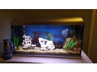 100 litre fish tank with lots of extras. Full set up