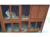 Rabbit boarding guinea pig boarding chinchilla chicken parrot and reptile boarding all small animals