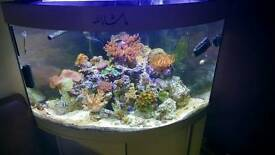 Marine fish tank with rock and some corals
