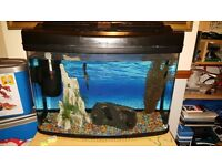65L Fish Tank With 4 Tropical Fish